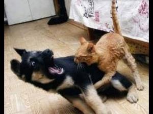 al9jeThNUXhhWE0x_o_big-dog-afraid-of-small-cat